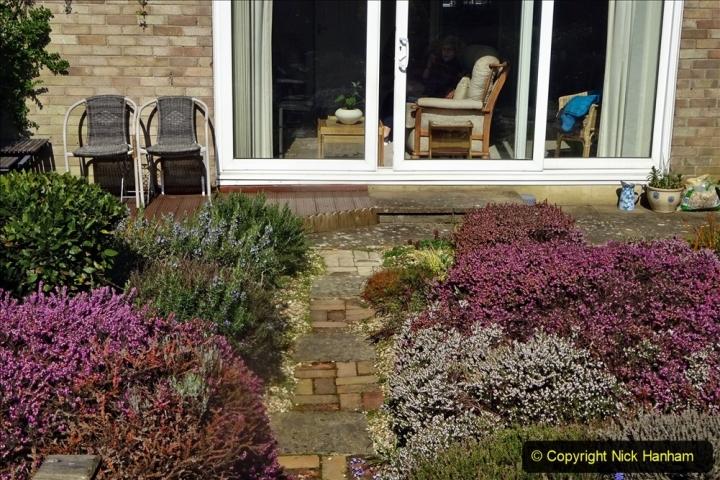 2021-04-04 A Poole garden in Spring. (5) 005
