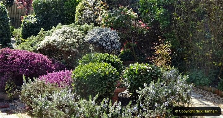 2021-04-04 A Poole garden in Spring. (51) 051