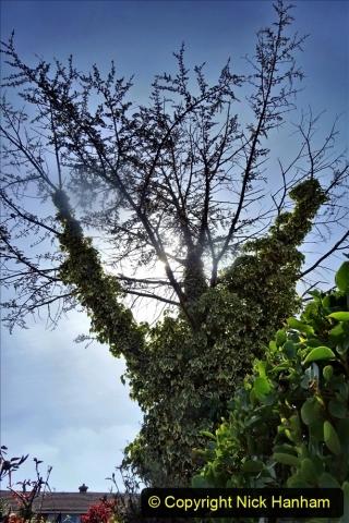 2021-04-04 A Poole garden in Spring. (52) 052
