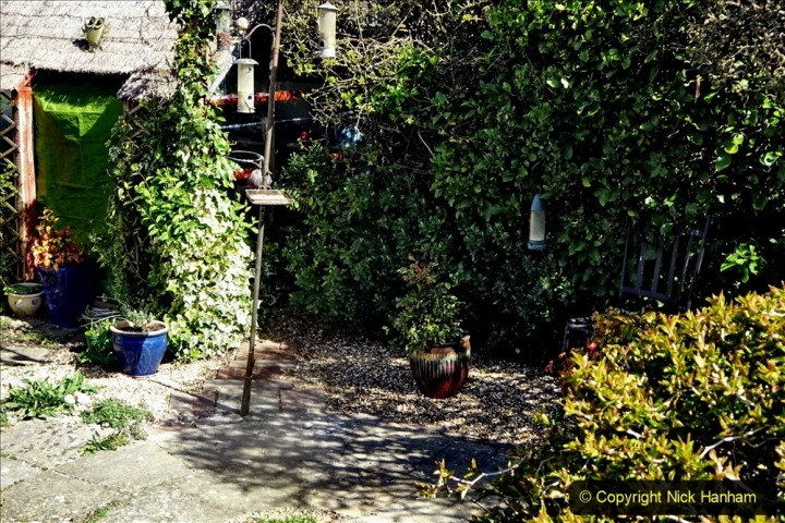 2021-04-04 A Poole garden in Spring. (6) 006