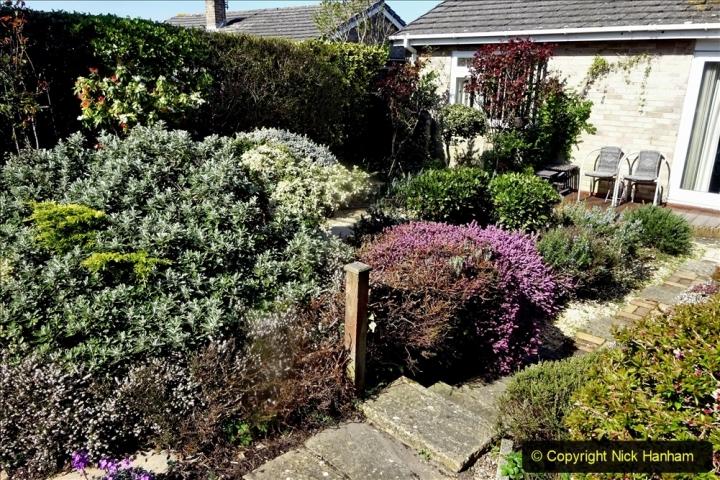 2021-04-04 A Poole garden in Spring. (7) 007