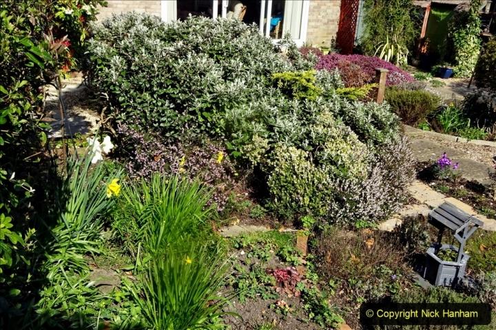 2021-04-04 A Poole garden in Spring. (9) 009