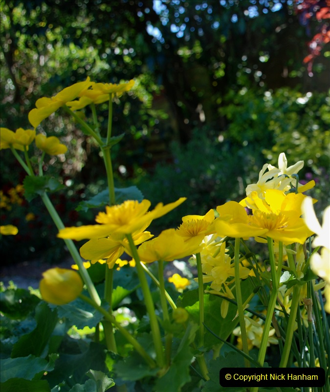 2019-04-21 A Poole Garden in Spring. (105)