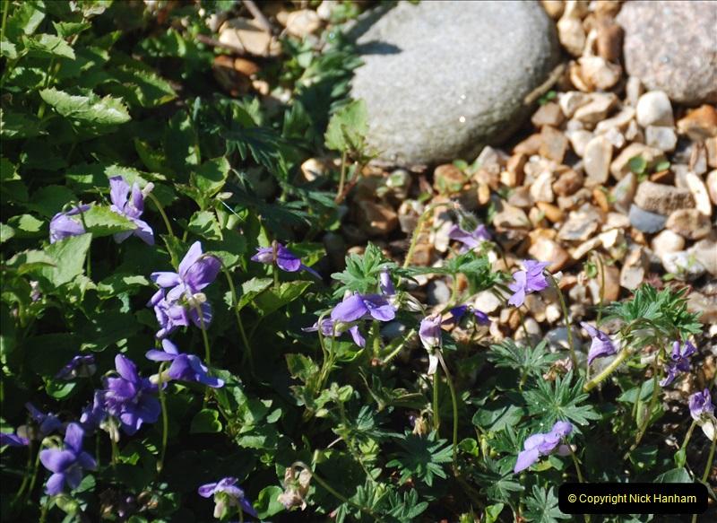 2019-04-21 A Poole Garden in Spring. (113)