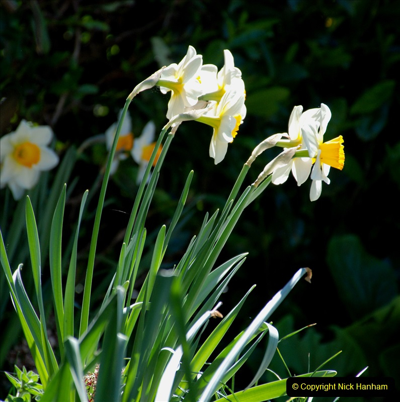 2019-04-21 A Poole Garden in Spring. (117)