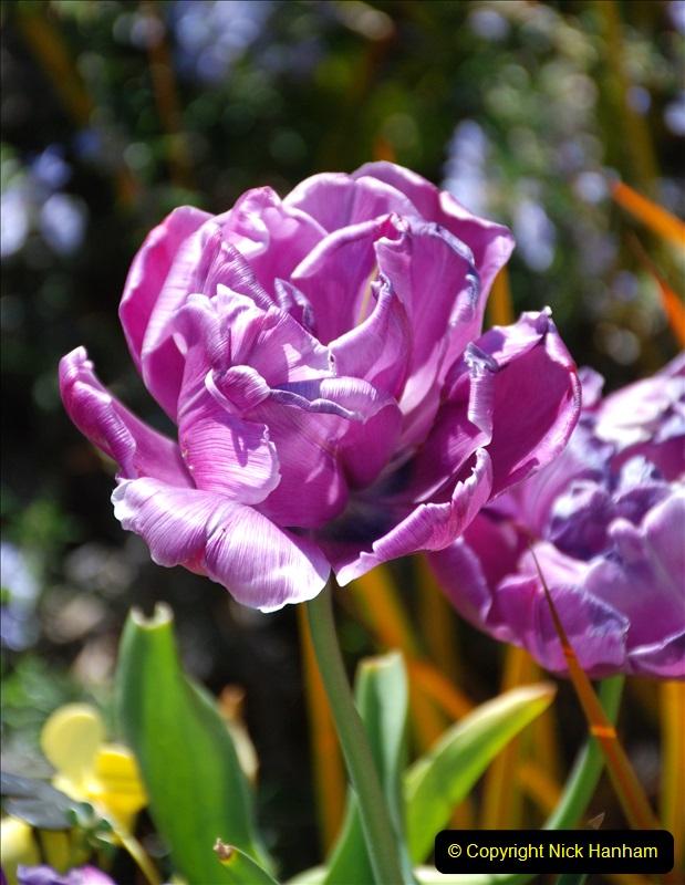 2019-04-21 A Poole Garden in Spring. (18)