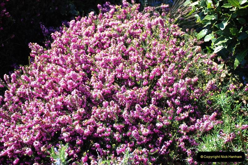 2019-04-21 A Poole Garden in Spring. (19)