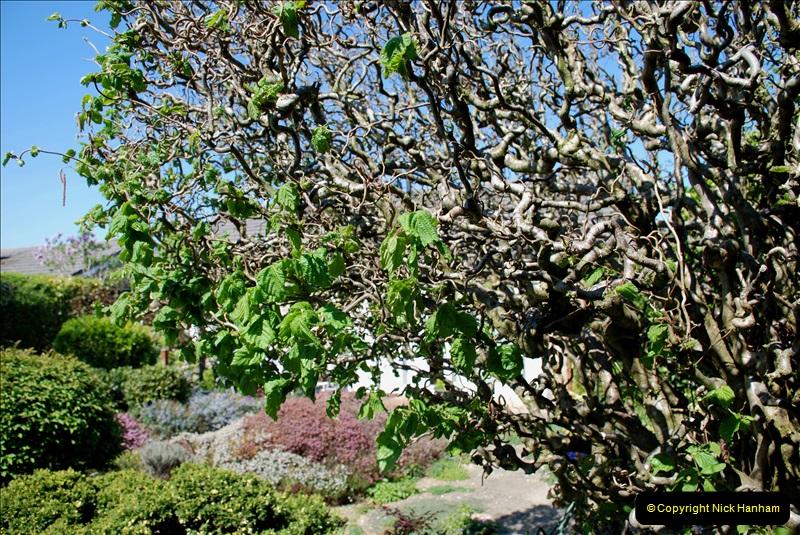 2019-04-21 A Poole Garden in Spring. (32)