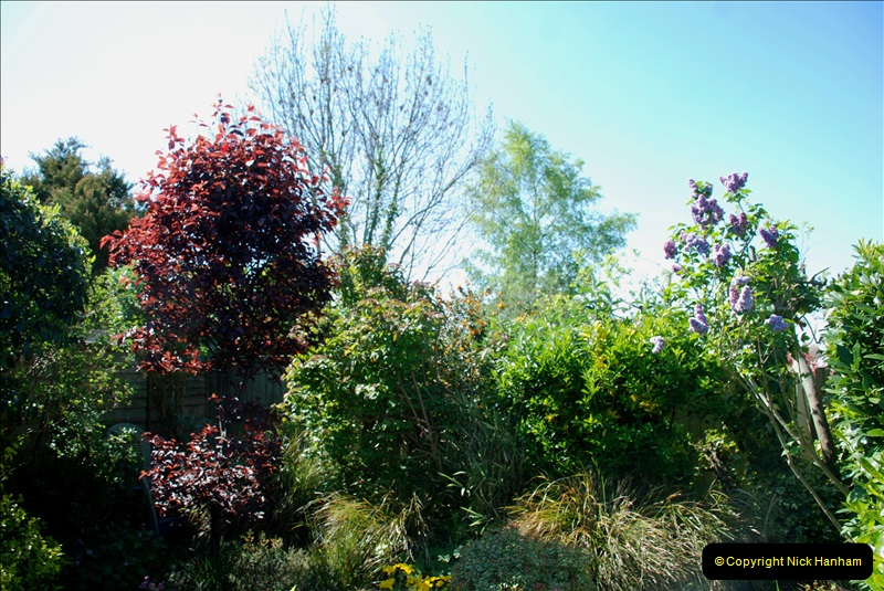 2019-04-21 A Poole Garden in Spring. (51)