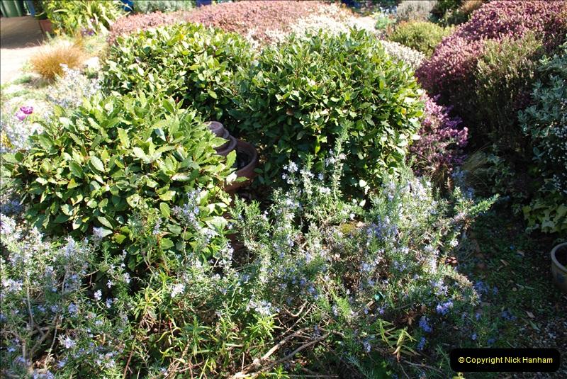 2019-04-21 A Poole Garden in Spring. (55)