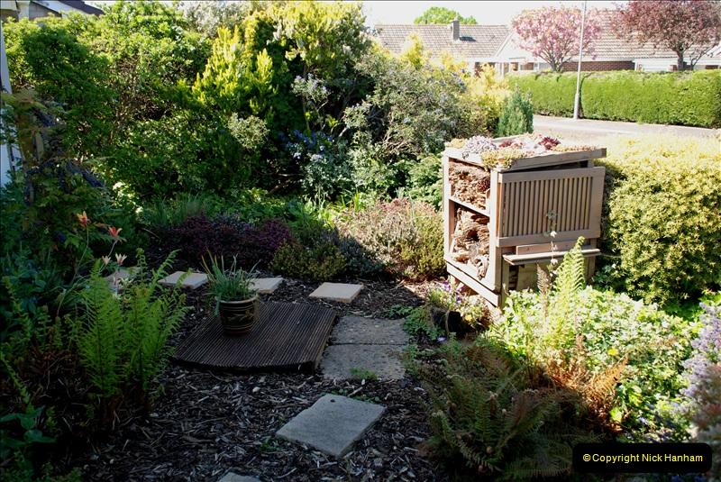 2019-04-21 A Poole Garden in Spring. (65)