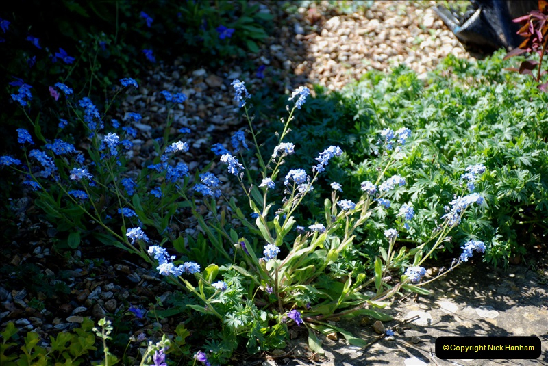 2019-04-21 A Poole Garden in Spring. (7)