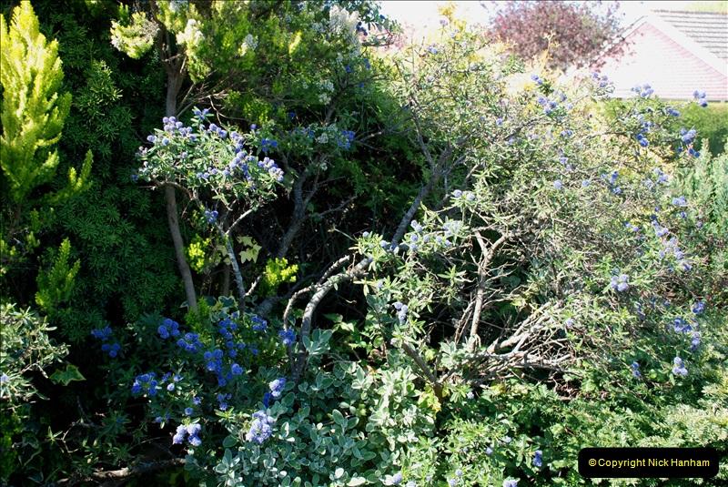 2019-04-21 A Poole Garden in Spring. (72)