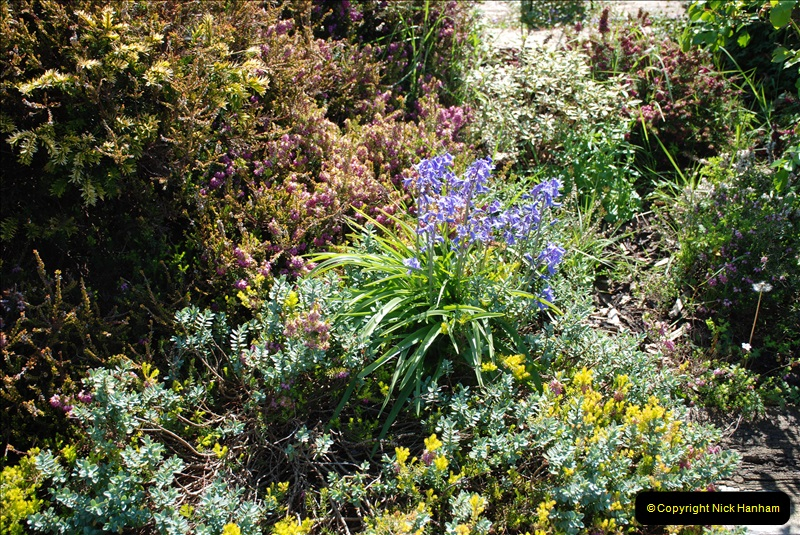 2019-04-21 A Poole Garden in Spring. (76)