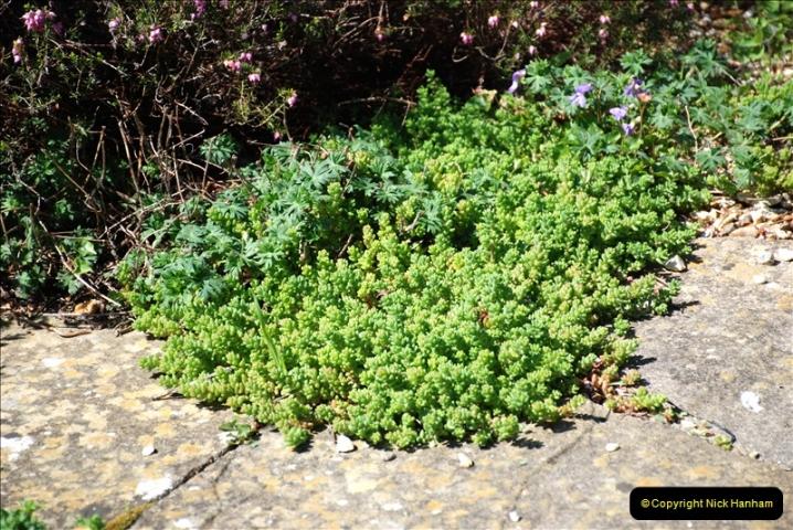 2019-04-21 A Poole Garden in Spring. (119)