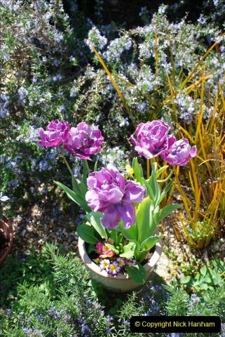 2019-04-21 A Poole Garden in Spring. (17)