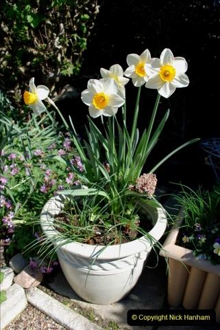 2019-04-21 A Poole Garden in Spring. (28)