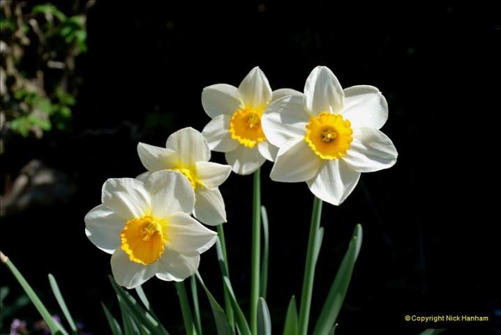 2019-04-21 A Poole Garden in Spring. (29)