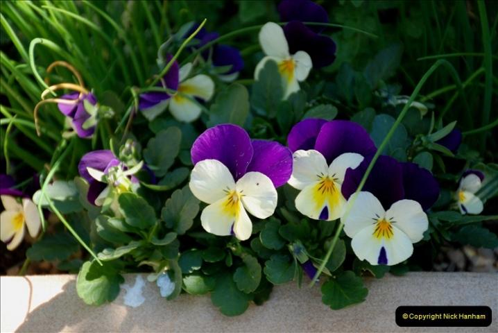 2019-04-21 A Poole Garden in Spring. (30)