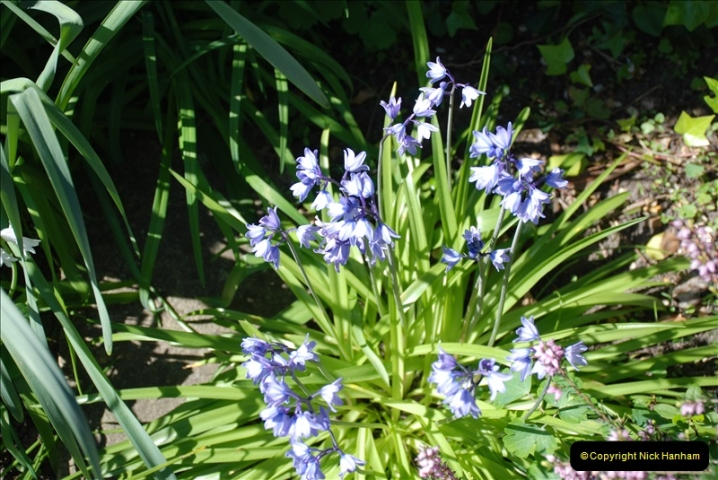 2019-04-21 A Poole Garden in Spring. (52)