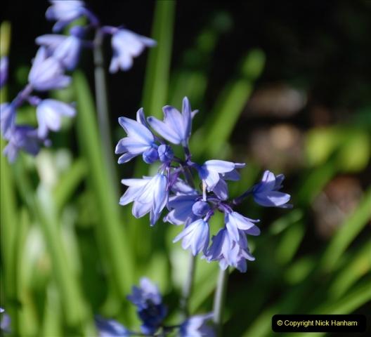 2019-04-21 A Poole Garden in Spring. (53)