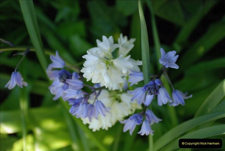2019-04-21 A Poole Garden in Spring. (54)