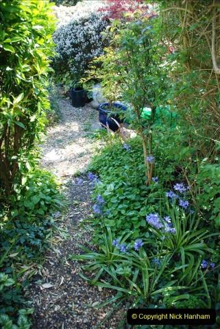2019-04-21 A Poole Garden in Spring. (59)