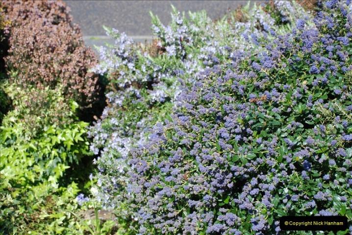 2019-04-21 A Poole Garden in Spring. (73)