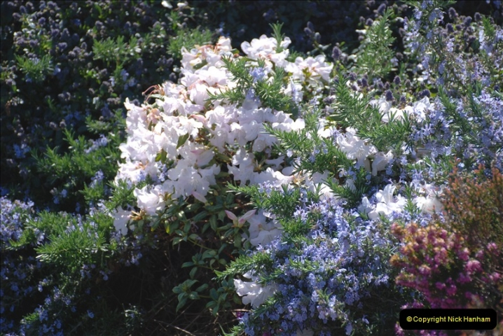 2019-04-21 A Poole Garden in Spring. (75)