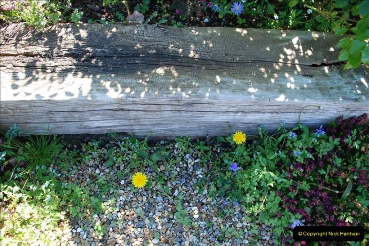 2019-04-21 A Poole Garden in Spring. (77)