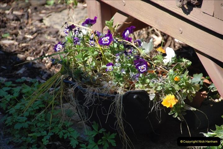 2019-04-21 A Poole Garden in Spring. (82)