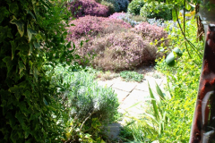 2019-04-21 A Poole Garden in Spring. (14)