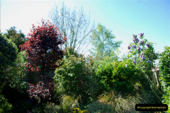 2019-04-21 A Poole Garden in Spring. (51)
