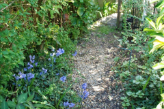 2019-04-21 A Poole Garden in Spring. (58)