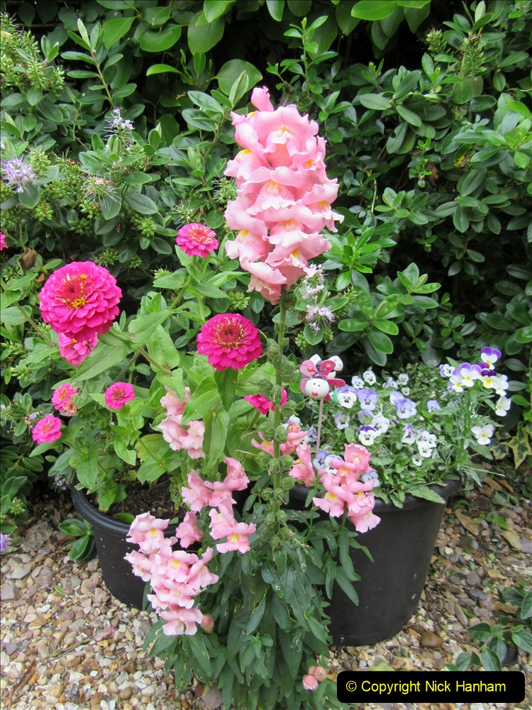 2019-07-11 A Poole Garden in Summer. (107) 107