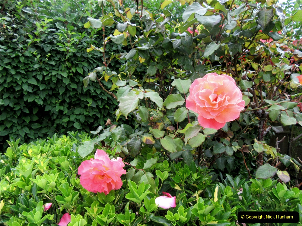 2019-07-11 A Poole Garden in Summer. (109) 109