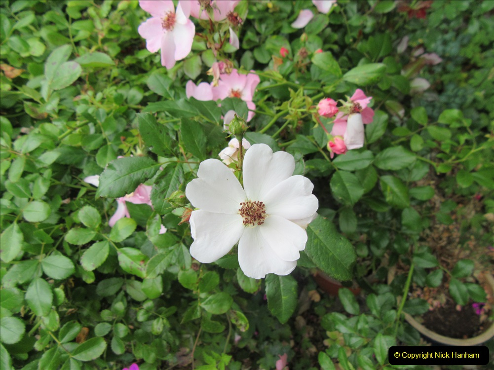 2019-07-11 A Poole Garden in Summer. (123) 123