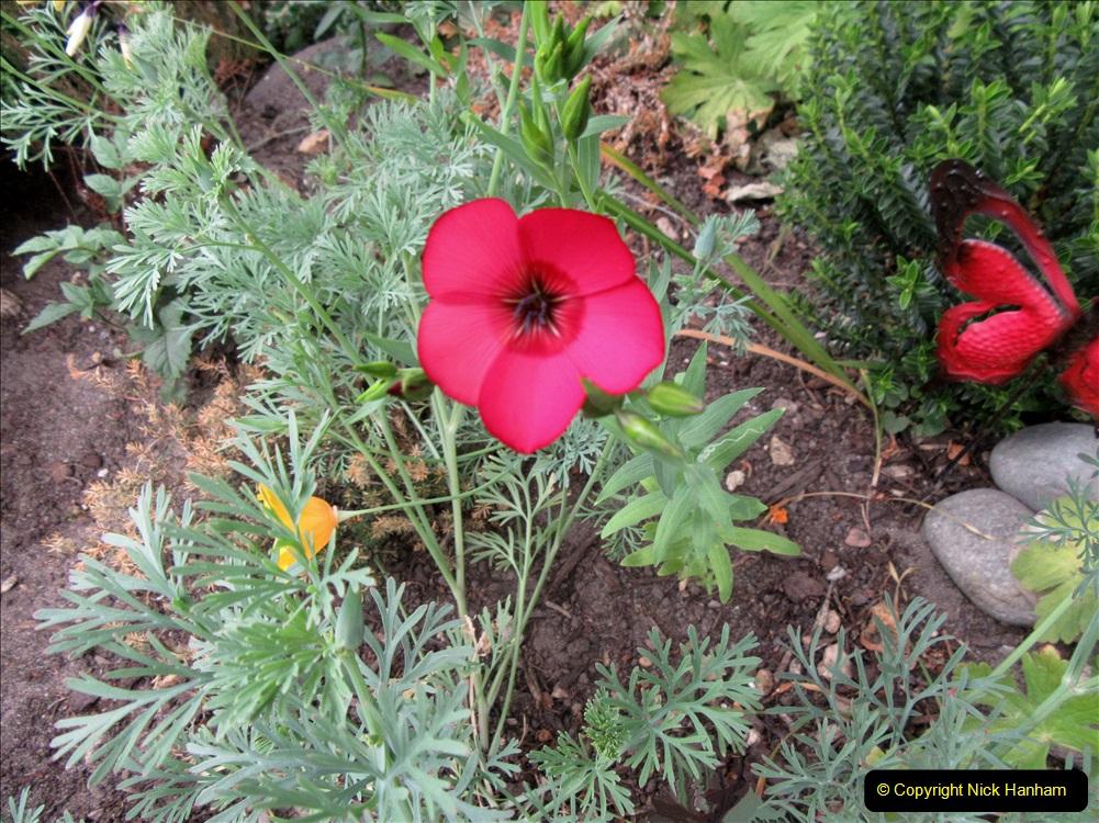 2019-07-11 A Poole Garden in Summer. (125) 125