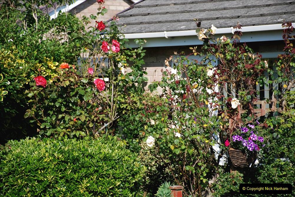 2019-07-11 A Poole Garden in Summer. (29) 029