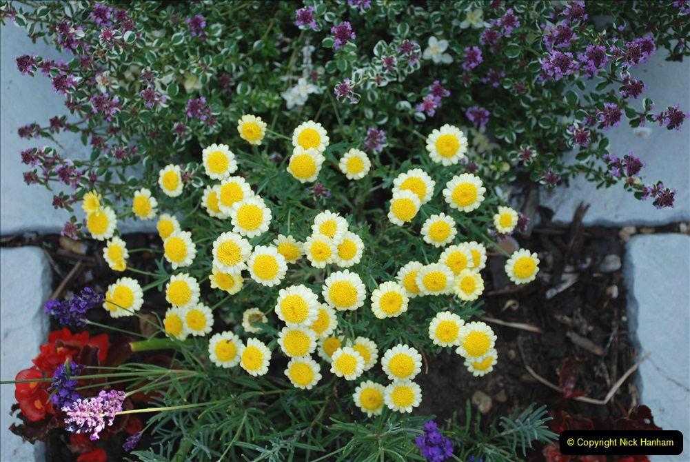 2019-07-11 A Poole Garden in Summer. (30) 030