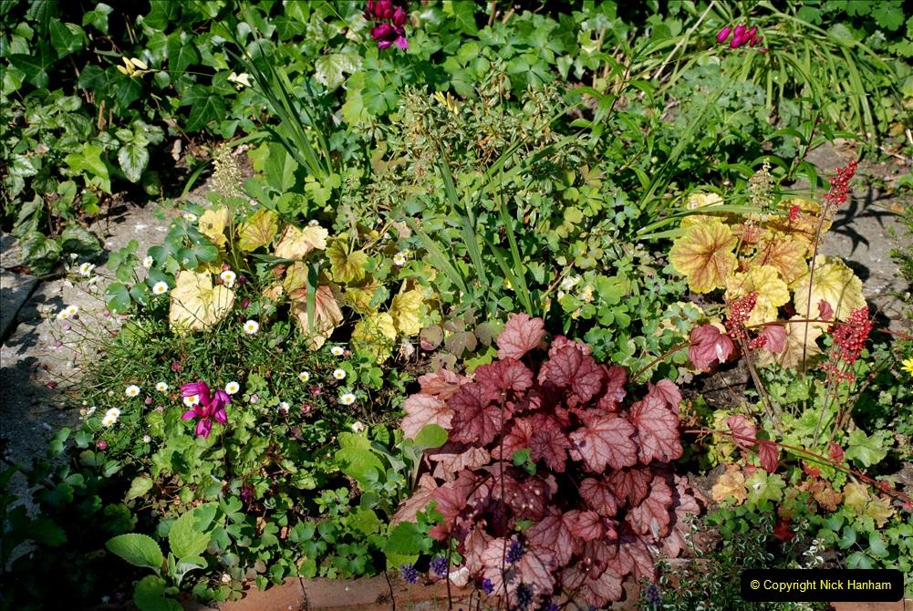 2019-07-11 A Poole Garden in Summer. (35) 035