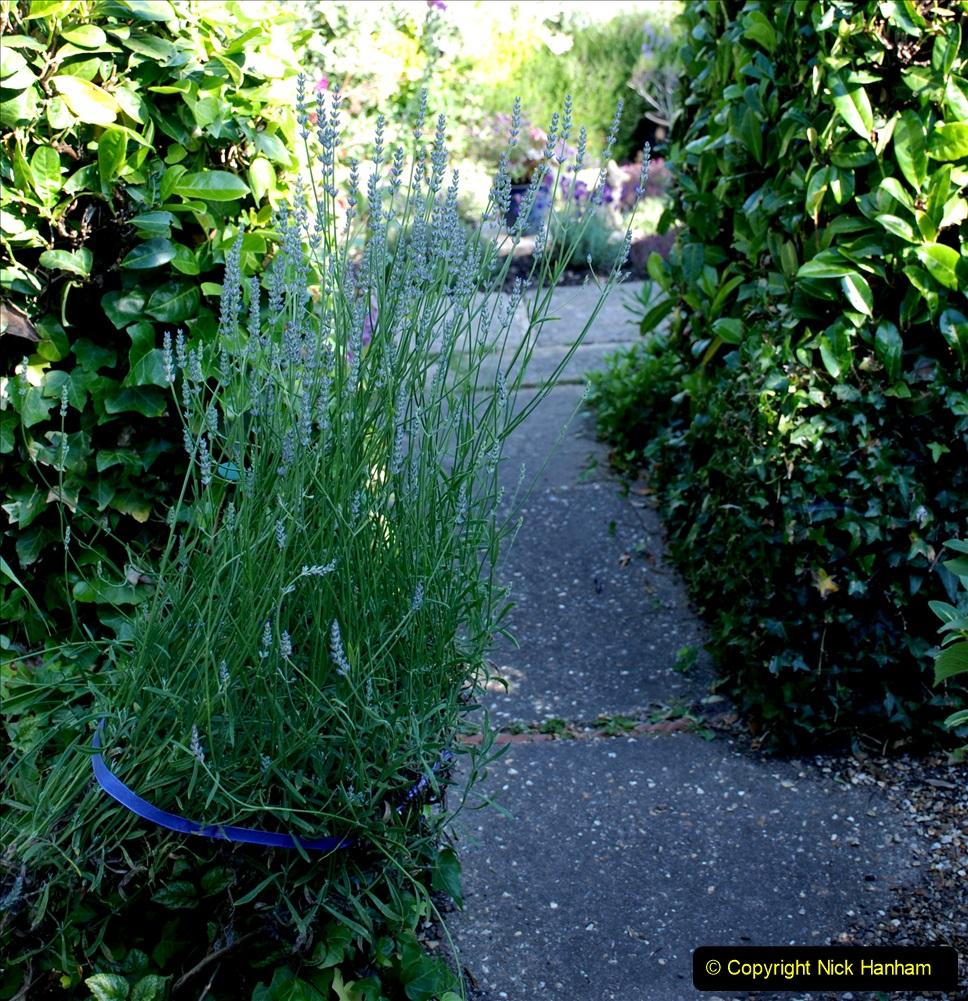 2019-07-11 A Poole Garden in Summer. (49) 049