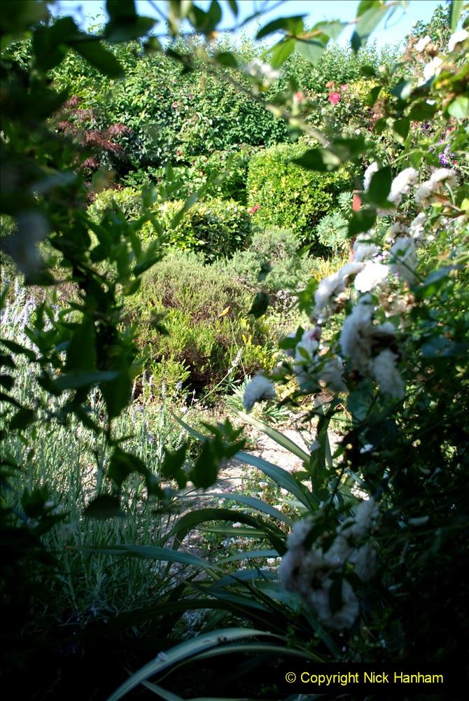 2019-07-11 A Poole Garden in Summer. (63) 063