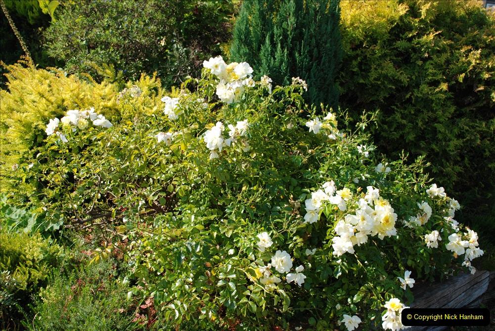 2019-07-11 A Poole Garden in Summer. (75) 075