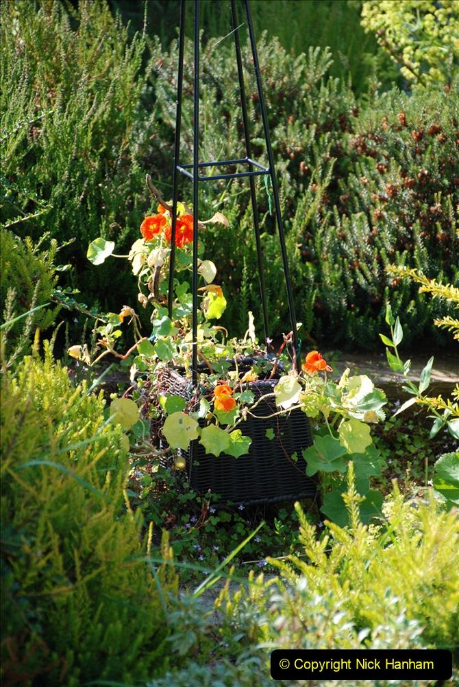 2019-07-11 A Poole Garden in Summer. (76) 076