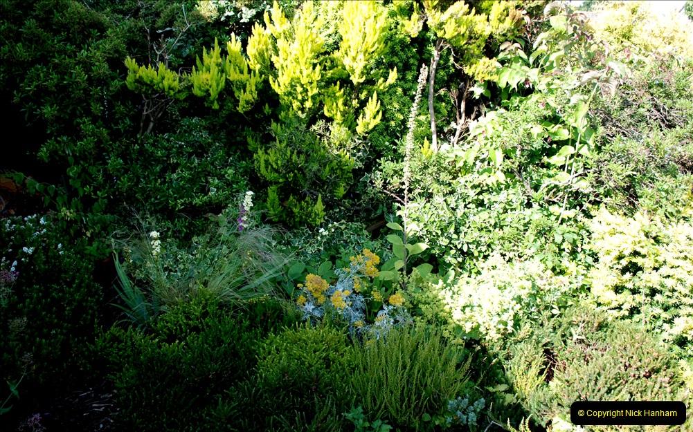 2019-07-11 A Poole Garden in Summer. (83) 083