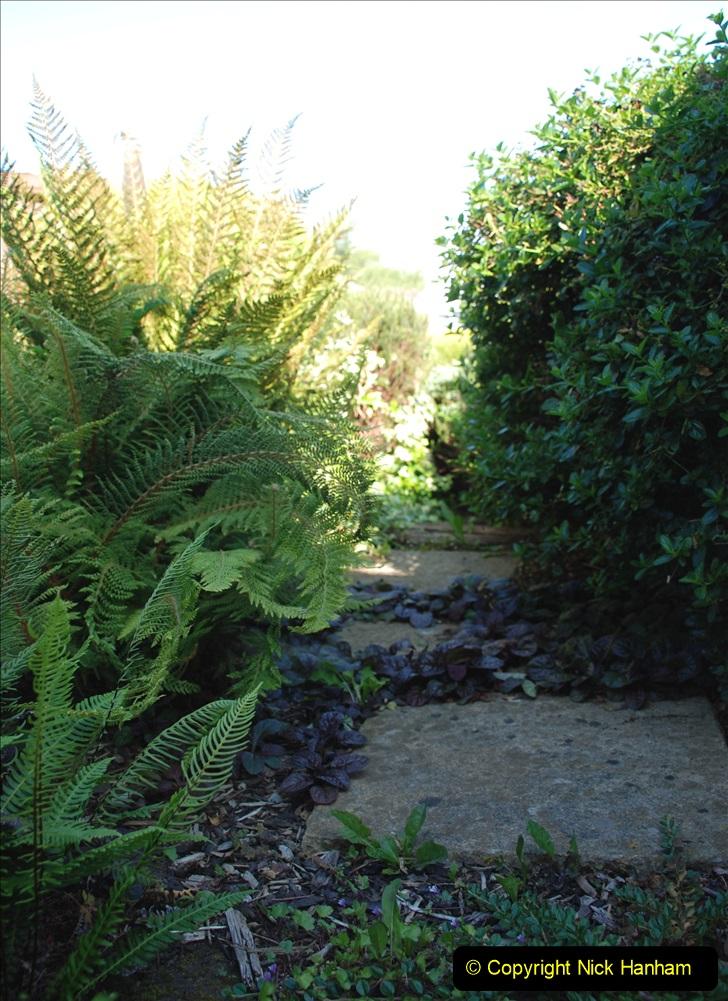 2019-07-11 A Poole Garden in Summer. (88) 088