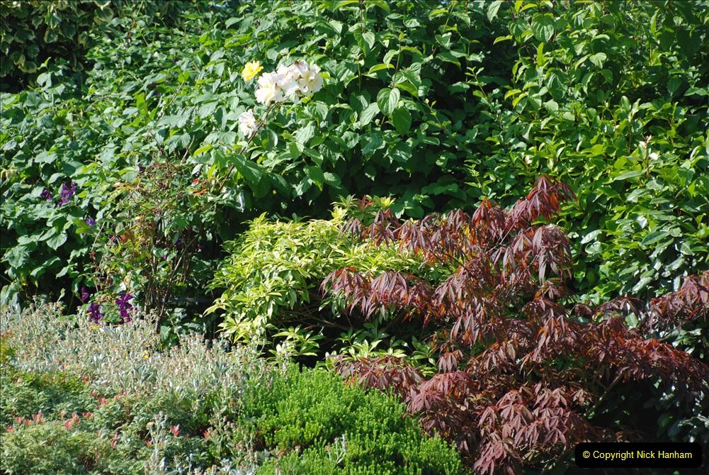 2019-07-11 A Poole Garden in Summer. (90) 090