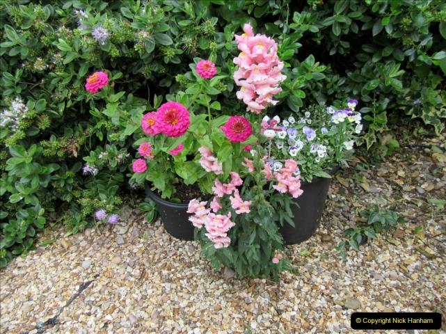 2019-07-11 A Poole Garden in Summer. (108) 108