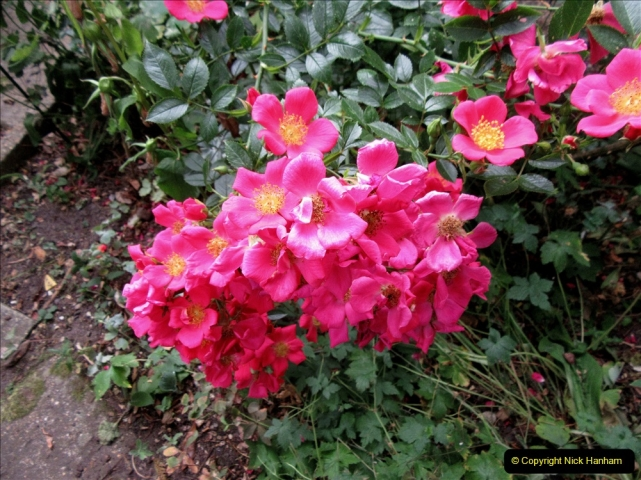 2019-07-11 A Poole Garden in Summer. (119) 119